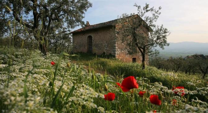 Dal 22 al 25 aprile un pic&nic tra gli ulivi a Trevi